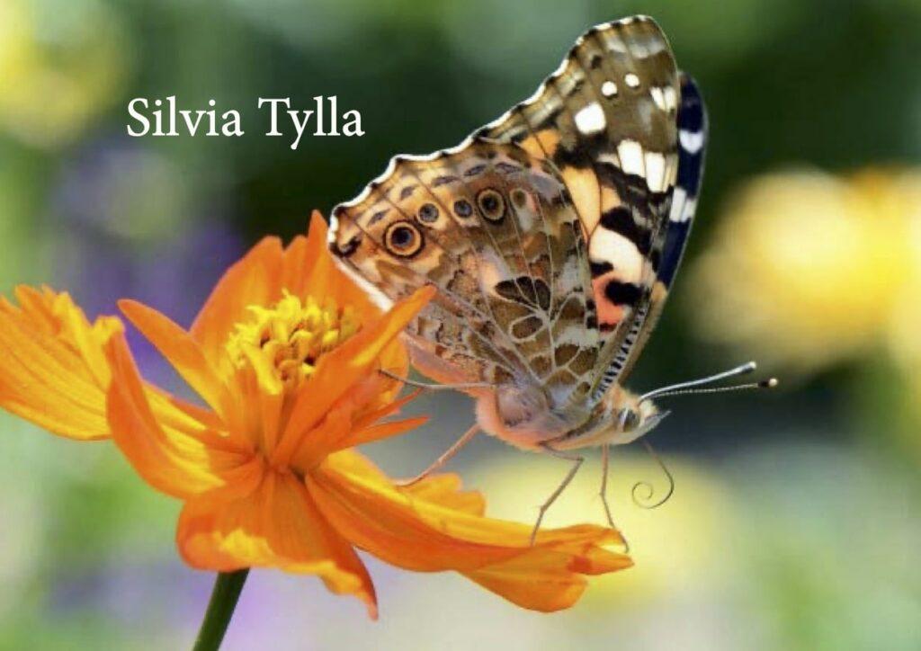 Sedcard Silvia Tylla